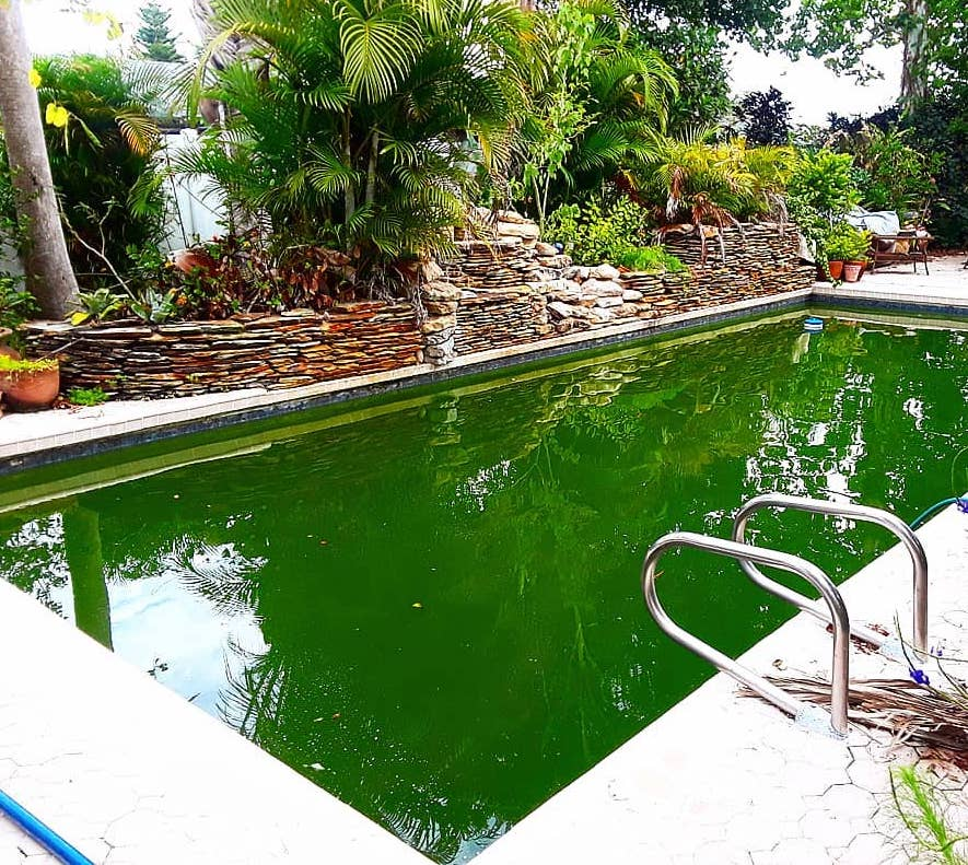Green Swimming Pool with Debris